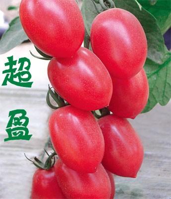 超盈-小西红柿苗