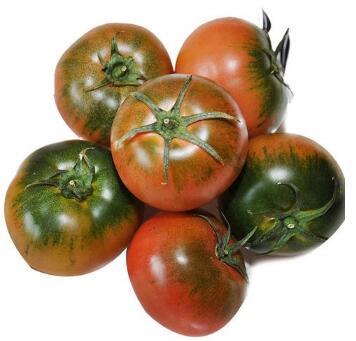 水果番茄苗