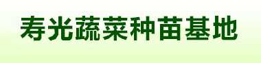 寿光蔬菜种苗批发基地欢迎你的光临,咨询服务电话:15662496283